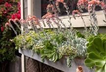 succulents / by botanik