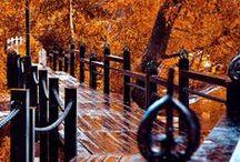 Fall Harvest!****