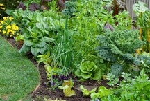 Outdoor Spaces: vegetable & herb gardening, edible landscaping / container gardening, raised beds, traditional gardens, fruit trees, Mediterranean landscaping, xeriscaping,