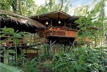 Tree-mendous dwellings!