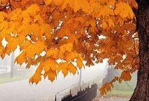 Fall Forward / by Britt Leigh
