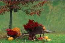 Autumn / by Carolyn Aiken