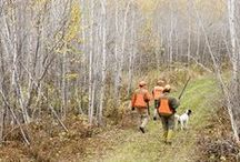 Hunting in Minnesota / Hunting is also a big tradition here, with small game, waterfowl, turkey, pheasant and deer seasons opening every fall. Hunters in other states envy Minnesota's ruffed grouse populations, too. Learn more by visiting www.exploreminnesota.com or our social channels. #OnlyinMN