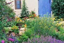Outdoor Spaces: Drought Tolerant & California Native / drought tolerant & native plants, xeriscape, xeriscaping