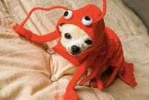 Pet Costumes / Ready to play pet dress-up? These cat cosplay ideas, clothing for dogs and other odd pet costumes from Trendhunter.com make great Halloween ideas for owners (and pets) with a sense of humor