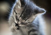 All Creatures Great and Small / My life's work has been based on animals... here are some pictures to warm your heart