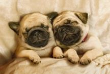 """I <3 Dogs!!! / Dog Family!!! - """"ok"""" not really cause I can't own this many dogs, BUT I can pinterest them ;) SOOOO Cute! / by Sienna Bergado"""