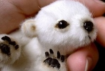 Adorable Animals / by Erin Durrant