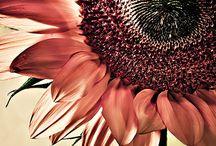 - FLOWER POWER -