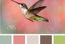 Color Palettes / Many of the color palettes I use in my designs are nature inspired--there's no greater inspiration than the beauty found in God's perfect creation!