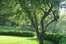 Garden / by Linda Hunt