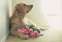 Les Fleurs / by beautifuli