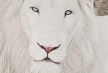 - LIONS ROARRR -