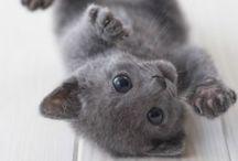 - KITTY CAT -