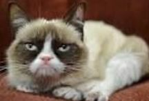 GrumpyCat / Grumpy Cat (born April 4, 2012), real name Tardar Sauce, is a cat and Internet celebrity known for her grumpy facial expression.