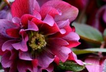 Plants / Plants / by Shelley Hugh-Jones Garden Design