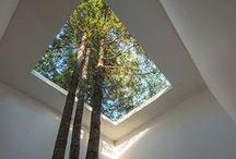 Trinity Rd / Garden Design / by Shelley Hugh-Jones