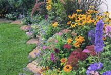 Garden / Gardening tips, photos of beautiful gardens / by Rachel Linquist
