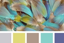 Color Scheme | Concepts / by Jovana Nikolic