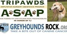 Tripawds People, Pets and News / Tripawds news about amputee pets, three-legged cats, dogs and other animal heroes and their humans.