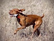 Terrific Tripawd Dogs / Photos of beautiful, inspirational and all around amazing dogs loving life on three legs.