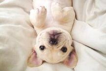 Cute. / by Casondra Bunker ♡
