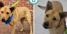 Adopt a Tripawd / Adopt a Tripawd dog, cat or other animal.