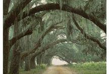 The South, y'all. / by Rachel Newby Washington