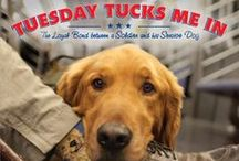 Tuesday Tucks Me In / The Loyal Bond Between a Soldier and his Service Dog | For more information and events, please visit www.tuesdaytucksmein.com