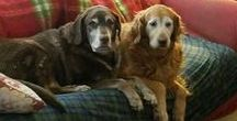 Super Senior Tripawd Dogs / Senior amputee cats and dogs can be happy on three legs.