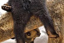 animals / by Deanna Whitehurst