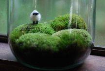 Mason jars / by Samantha Morine Crocker