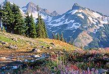 National Parks - Yellowstone / Yellowstone and Grand Tetons