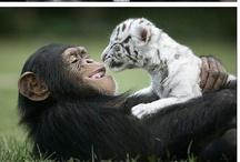 Animals ~ Monkey see, Monkey do / by JSP