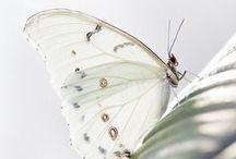 Bees, Butterflies & Moths / by JSP
