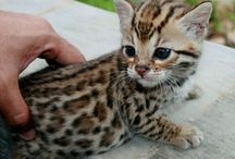 I want every pet in the world!