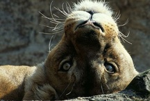 Pretty Wild Animal Kingdom