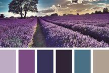 Colour Scheme Inspiration
