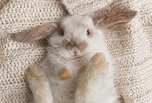 Bunnies / by Chloé Whyte