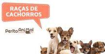 Raças de cachorros / Aqui poderá encontrar as diferentes raças de cachorros existentes bem como as suas caraterísticas :)