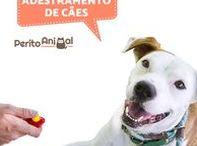 Adestramento de cães / Aqui poderá encontrar dicas úteis para educar o seu amigo de quatro patas :)