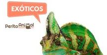 Animais exóticos / Aprenda tudo sobre estes animais aqui, os seus cuidados, curiosidades e muito mais!