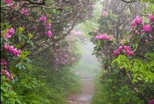 Garden: Landscape Features