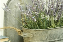 Garden: Potted plants