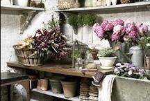 Garden: Sheds & Greenhouses