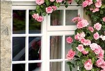 Garden: Flower Beds