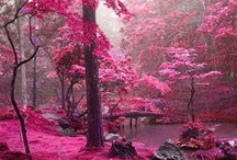 beautiful places / i want to go to there
