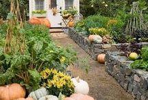 Home & Flowers Gardening / Gardening,flowers , vegetable, fruits Tuin,moestuin , bloemen, tuinieren