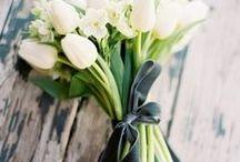 Flowers  b l o e m e n