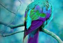 Birds / Birds big and small